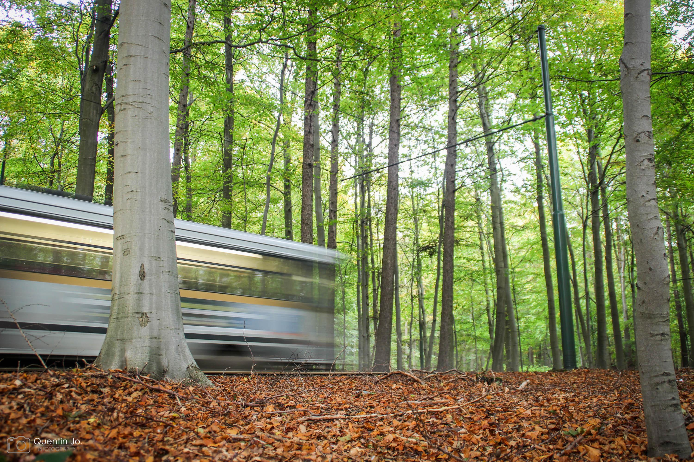 Gevallen bladeren, vijand van onze trams