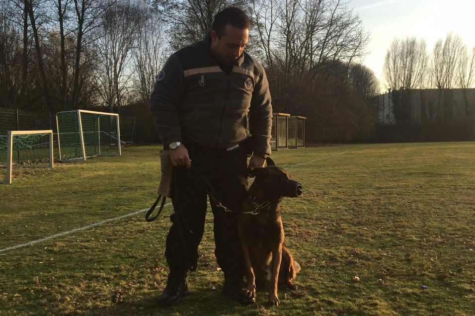 mirko brigade canine stib