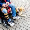 Als een assistentiehond les komt volgen op de bus