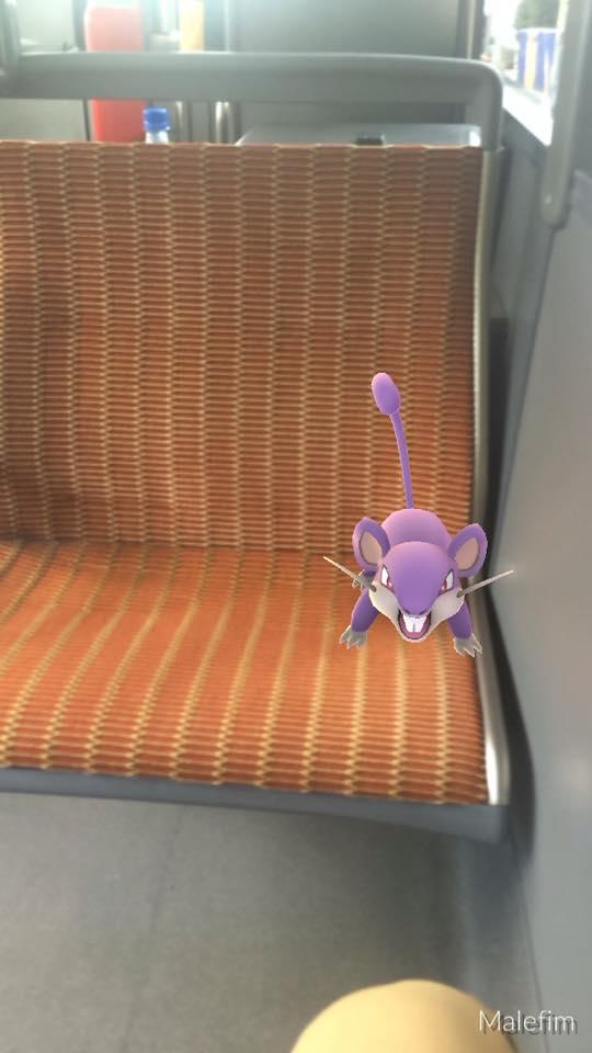Rattata staat vrijwillig zijn plaats af aan iemand die daar nood aan heeft (foto Matthieu Lefebvre)